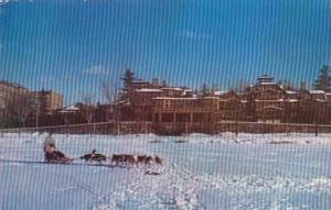 Winter Sports Dog Team On Mirror Lake Lake Placid Club Lake Placid New York