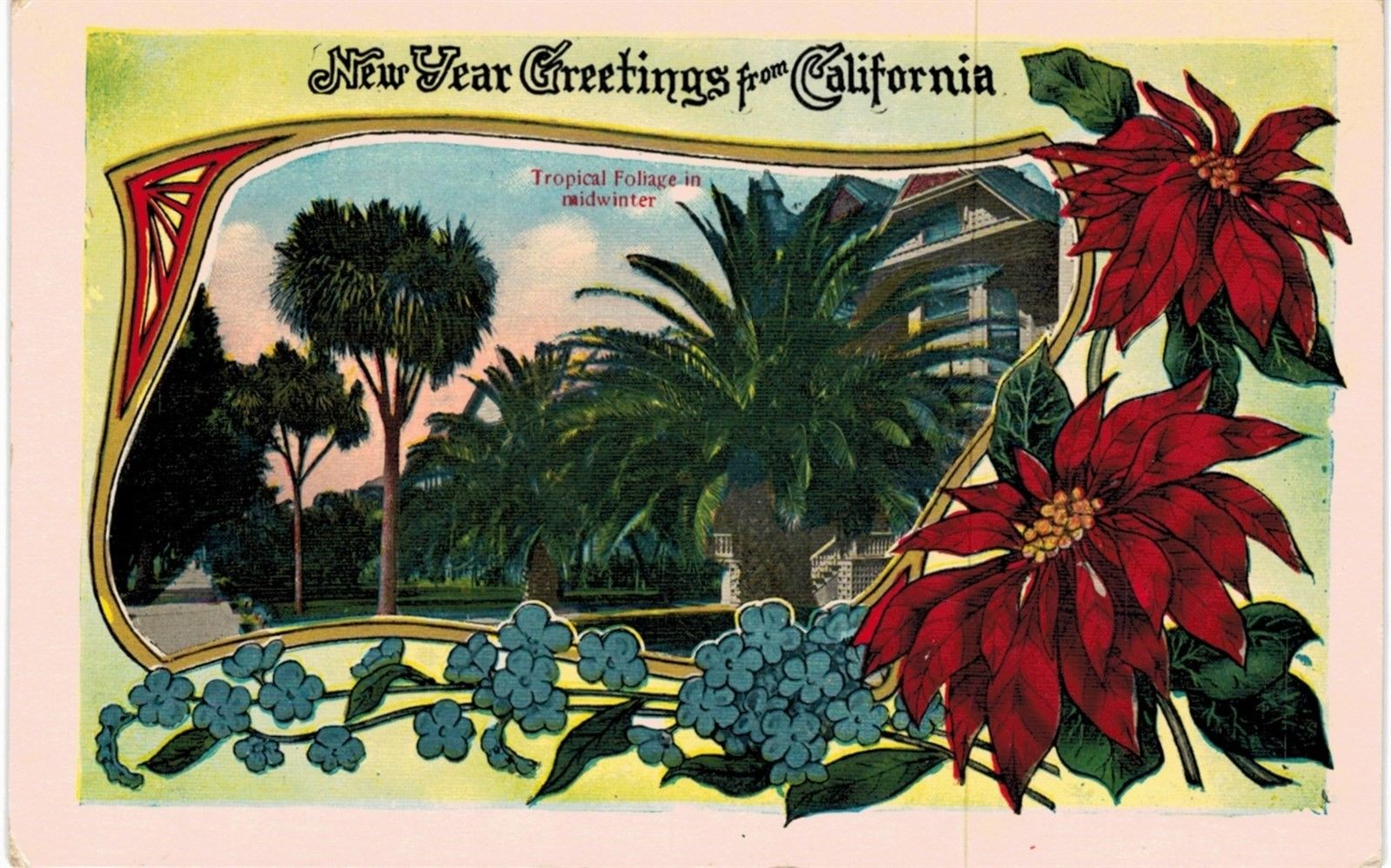 New Years Foliage >> Happy New Year From California Tropical Foliage 1910 Ca Hippostcard