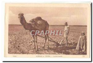 Morocco Old Postcard A plowing (dromedary camel)