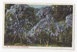 CA Wisteria Trees M Kashower Vintage Postcard