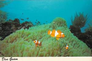 Guam Underwater Scene Clown Fish and Anemone