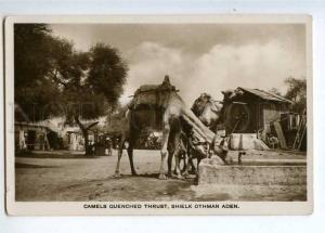 232811 ADEN Sheielk Othman CAMELS Vintage photo postcard