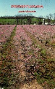 Pennsylvania Peach Blossoms 2001