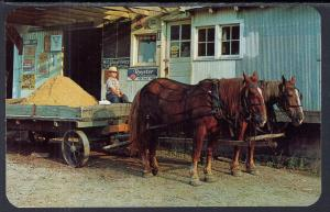 Amish Horses and Wagon,IN