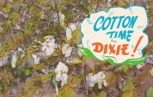 Cottons Bolls Cotton Time In Dixie