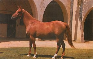 Three Year Old Chestnut Filly Horse Unused