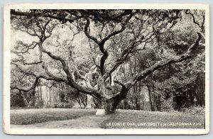 Berkeley~University of California~Le Conte Oak Tree~Path to Stone Marker~1916