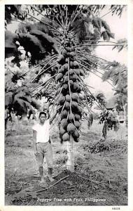 Philippines Papaya Tree with Fruit  Papaya Tree with Fruit