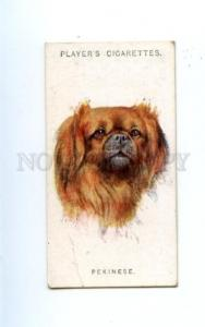 166932 PEKINESE by WARDLE Player CIGARETTE card ADVERTISING