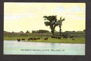 ME View Vaughn's Eastate Dairy Farm Cow Herd Hallowell Maine Postcard 1910