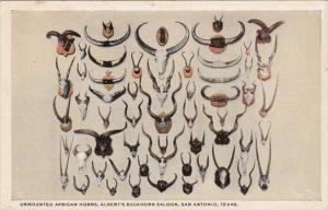 Texas San Antonio Unmounted African Horns At Albert's Buckhorn Saloon Curteich
