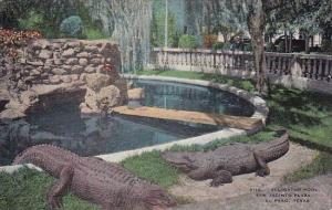 Alligator Pool San Jacinto Plaza El Paso Texas