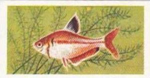 Mitchum Foods Vintage Trade Card Aquarium Fish 1957 2nd Series No 37 Serpa Li...