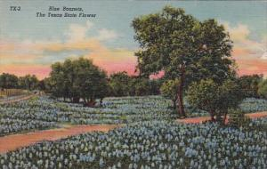 Blue Bonnets The Texas State Flower 1969 Curteiclh