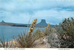 USA Lake Powell Desert Contrast Yucca Blooming Sandy Shores