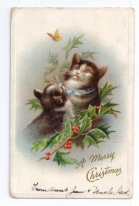 Christmas Cats Holly Butterfly Embossed Postcard ca 1910