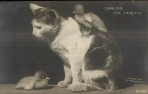 Rotograph Kitty Cat & Chicks SCALING THE HEIGHTS c1905 Real Photo Postcard