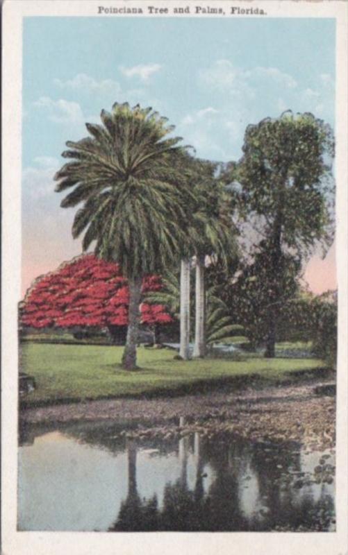 Florida Trees Poinciana Tree and Palms
