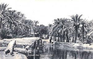 Basra Iraq Across the Kora Raphael Tuck Postcard
