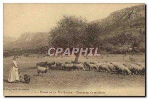 Old Postcard Foret La Sainte Baume Herd of Female sheep