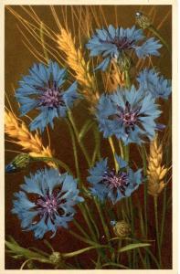 Flowers -   Corn Flower            (Thor & Gyger #725)