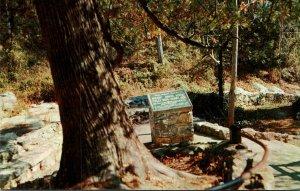 Virginia Natural Bridge Historic Arbor Vitae Tree