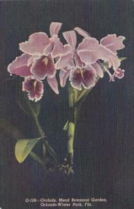 Florida Orlando-Winter Park Orchids Mead Botanical Gardens Curteich