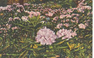 Rhododendron and Laurel Rock City Gardens Lookout Mountain Chattanooga Tennes...