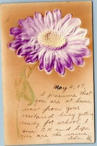 Embossed postcard purple daisy posted 1908