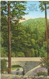 200-Loop near Newfound Gap, Great Smoky Mountains Nationa...
