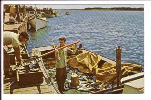 Unloading the Day's Catch, Mackerel, North Rustico, Prince Edward Island, Use...