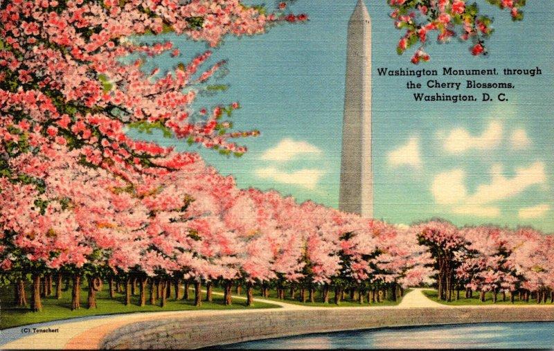 Washington D C Washington Monument and The Cherry Blossoms