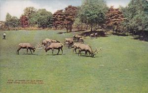 Part Of Elk Herd New York Zoological Park New York City New York