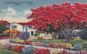 Royal Poinciana Tree And Home Florida