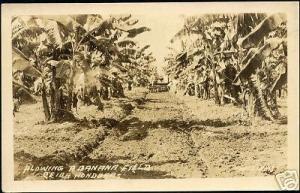 honduras, CEIBA, Plowing a Banana Field (1930s) RPPC