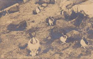RP, Rabbits, Kaninchen, Zoologischer Garten Berlin, Germany, 1920-1940s