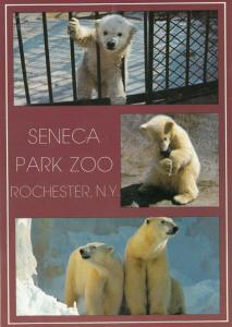 Baby Polar Bears at Seneca Park Zoo Rochester Postcard