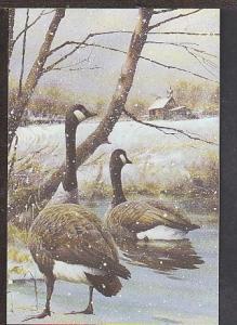 Geese Winter Scene Postcard BIN