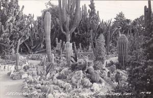 Texas Edinburg Section Of Pirtle's Cactus Garden Real Photo