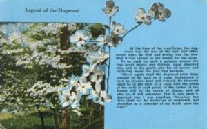Legend of the Dogwood, unused Postcard