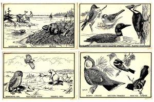 Canadian Natural History - Series of 9 Cards (#5 missing). Artist: T.M. Shortt