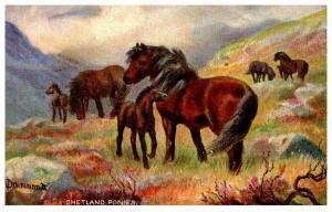 Horses   Shetland Ponies  Tuck's no. 9065