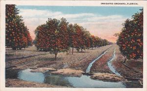 Florida Irrigated Orcard