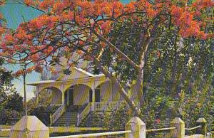 Poincianas With Beautiful Home Key West Florida