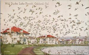 Wild Ducks Lake Merritt Oakland CA California UNUSED Postcard D87