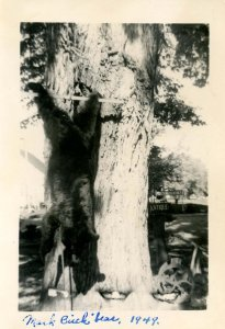 NH - North Conway. Bear Shot by Mark Birch, 1949 (3.375 X 5.00)