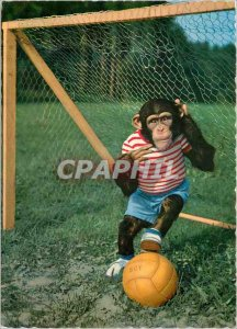Postcard Chimpanzee Monkey Modern Football