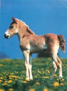 Lissy ein Herz fur Pferde foal horse postcard