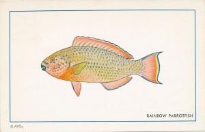 Rainbow Parrotfish - Tropoical Fish found on the Reefs near Florida