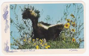 Striped Skunk among the wild flowers, BANFF, Alberta, Canada, 40-60s